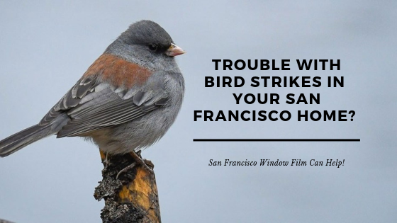 bird strike window film san francisco